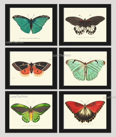 Butterfly Print SET of 6 Art Print  NODD Antique Insect Illustration Garden Nature Natural Science Home Room Wall Decor Interior Design