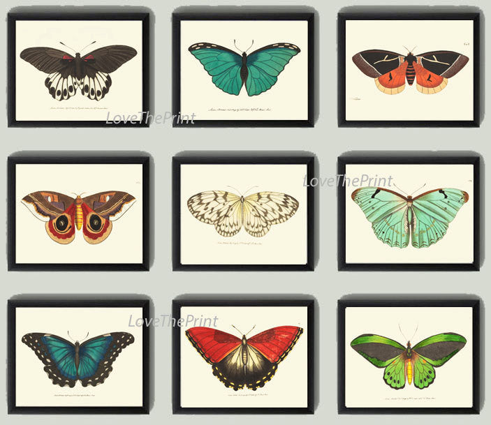 Butterfly Print SET of 9 Art Print  NODD Antique Insect Illustration Garden Nature Natural Science Home Room Wall Decor Interior Design