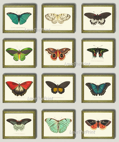 Butterfly Print SET of 12 Art Print  NODD Antique Insect Illustration Garden Nature Natural Science Home Room Wall Decor Interior Design
