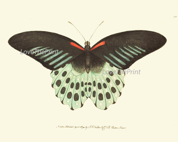 BUTTERFLY PRINT  Botanical Art Print NOD34 Beautiful Ivory Red Butterflies Colorful Detailed Summer Garden Nature Home Room Wall Decor