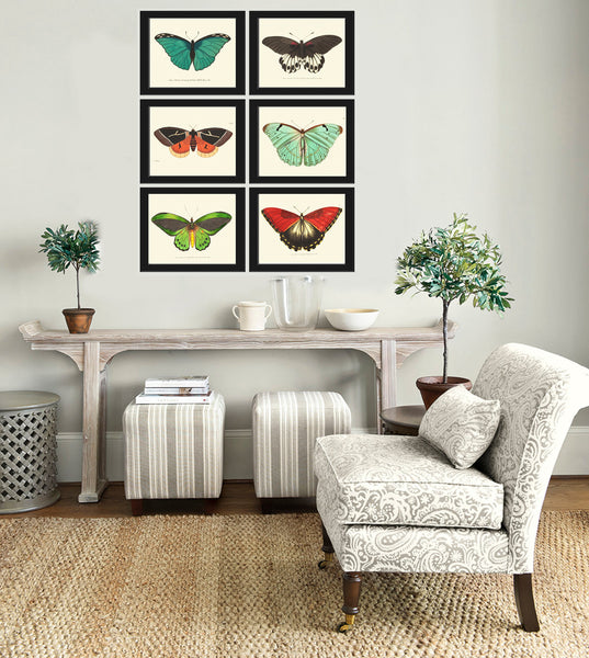 BUTTERFLY PRINT  Botanical Art Print NOD38 Beautiful Green Butterflies Colorful Detailed Summer Garden Nature Home Room Wall Decor