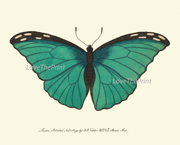 BUTTERFLY PRINT  Botanical Art Print NOD136 Beautiful Aqua Insect Colorful Detailed Summer Flower Garden Nature Home Room Wall Decor