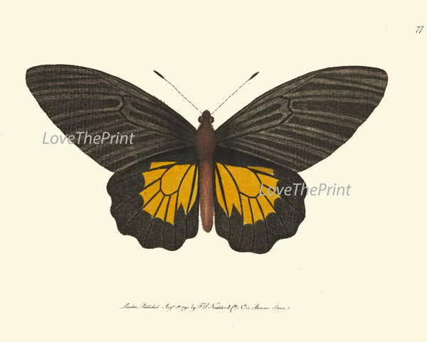 BUTTERFLY PRINT  Botanical Art Print NOD146 Beautiful Yellow Insect Colorful Spring Summer Flower Garden Nature Home Room Wall Decor