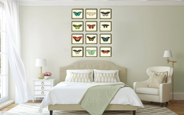 BUTTERFLY PRINT  Botanical Art Print NOD159 Beautiful Yellow Insect Colorful Spring Summer Flower Garden Nature Home Room Wall Decor