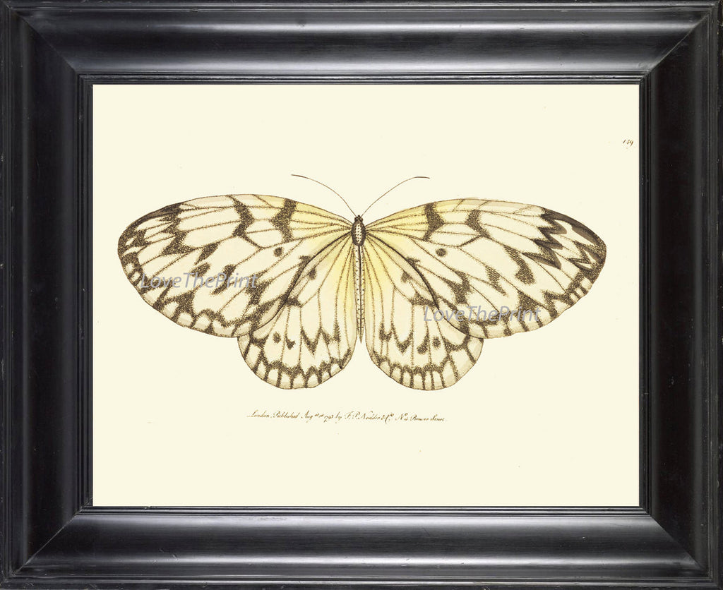 BUTTERFLY PRINT  Botanical Art Print NOD173 Beautiful Insect Colorful Spring Summer Flower Garden Nature Home Room Wall Decor to Frame