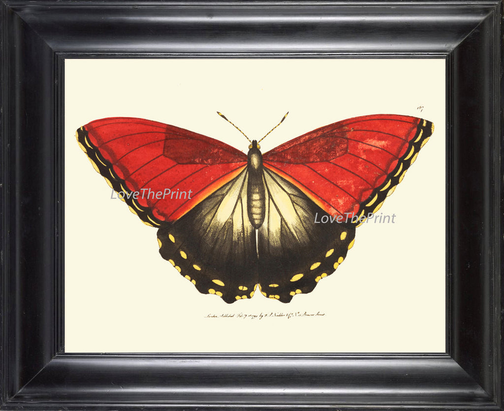BUTTERFLY PRINT  Botanical Art Print NOD175 Beautiful Red Large Spring Summer Flower Garden Nature Home Room Wall Decor to Frame