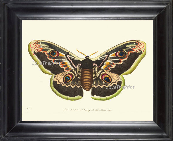 BUTTERFLY PRINT  Botanical Art Print NOD344 Beautiful Large Spring Summer Flower Garden Nature Moth Home Room Wall Decor to Frame