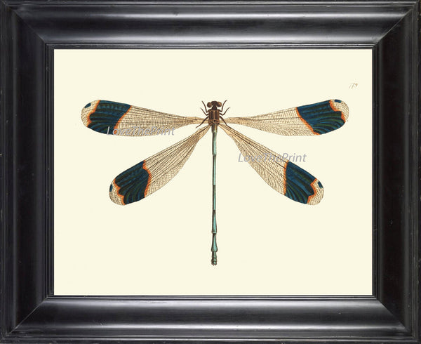 Dragonfly PRINT  Botanical Art Print NOD562 Beautiful Large Blue Antique Illustration Flower Garden Nature Home Room Wall Decor to Frame