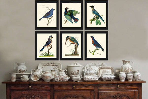Bird Print Set of 6 Antique  Beautiful Birds Blue Jay Blue Grosbeak Chaterrer Bird Cyanean Crow Home Room Wall Decor to Frame NODD