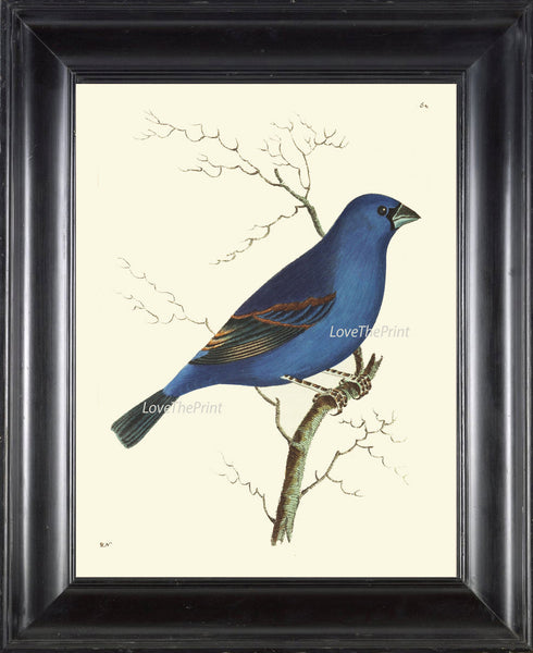 Bird Print  Art NOD419 Beautiful Antique Blue Grosbeak Colored Illustration Decoration Wall Hanging Home Decor Bird Watching to Frame