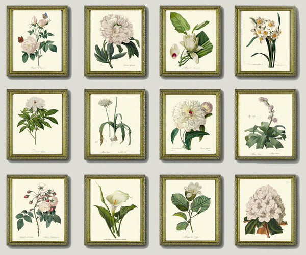 BOTANICAL Print SET of 12 Art Prints  Redoute Beautiful French Garden Antique White Flowers Home Room Decor Interior Design Illustration
