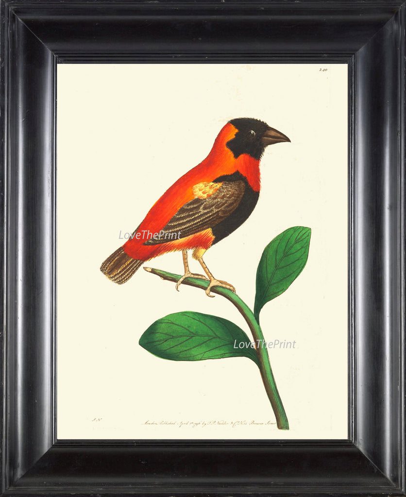 Bird Print  Art NOD224 Beautiful Antique Red Orange Songbird Green Tree Leaves Picture Illustration Nature Wall Home Room Decor to Frame