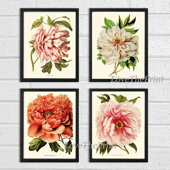 BOTANICAL Print SET of 4 Art  Antique Peony Peonies White Coral Plants Spring Summer Garden Nature Vintage Wall Home Decor Illustration