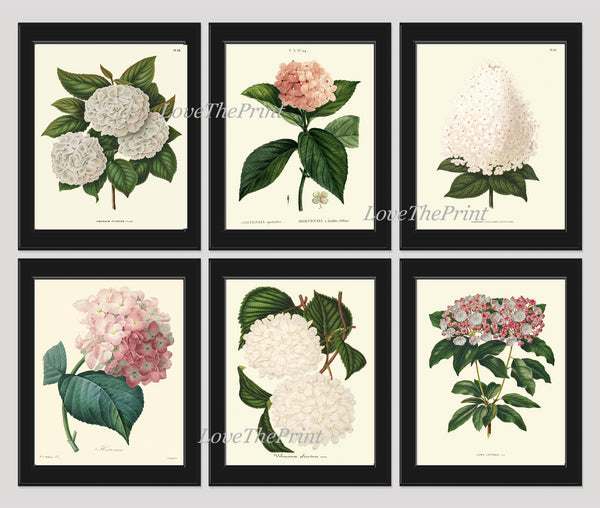 BOTANICAL Print SET of 6 Art  Antique Beautiful Hydrangea Flowers Plants White Pink Spring Summer Garden Nature Vintage Wall Home Decor