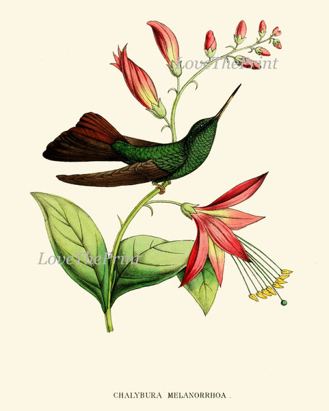 Hummingbird Print SET of 12 Art  Beautiful Antique Humminbirds Birds Tropical Pink Flowers Botanical Garden Illustration Decor to Frame