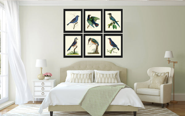 Bird Print  Art NOD593 Beautiful Antique Blue Chatterer Bird Illustration Decoration Wall Hanging Home Room Decor Forest Nature to Frame