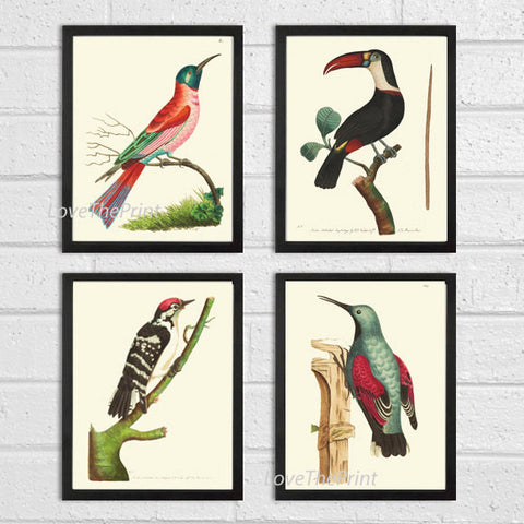 Bird Print Set of 4 Antique  Beautiful Birds Large Toucan Woodpecker Red Aqua Forst Nature Home Room Wall Decor Decoration to Frame NODD
