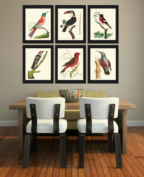 Bird Print  Art NOD172 Beautiful Antique Red Bird Tree Branch Illustration Decoration Wall Home Room Decoration Forest Nature to Frame