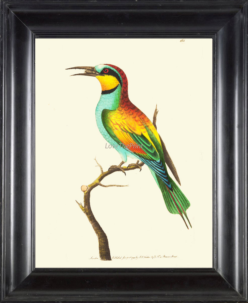Bird Print  Art NOD182 Beautiful Antique Illustration Yellow Colorful Colored Bee Insect Tropical Island Wall Home Room Decor to Frame