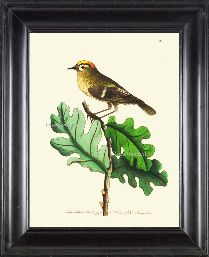 Bird Print  Art NOD185 Beautiful Antique Illustration Small Forst Nature Bird Tree Leaves Ivory Background Wall Home Room Decor to Frame
