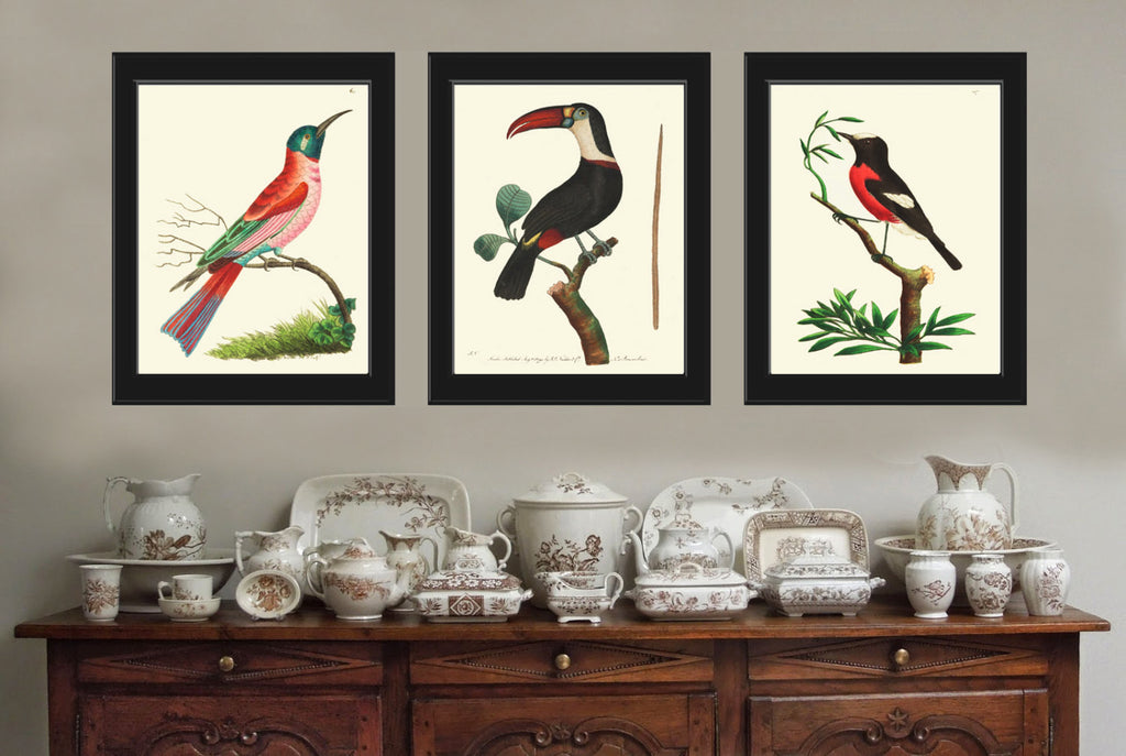 Bird Print Set of 3 Antique  Beautiful Birds Large Toucan Red Aqua Forst Nature Tree Home Room Wall Decor Decoration to Frame NODD