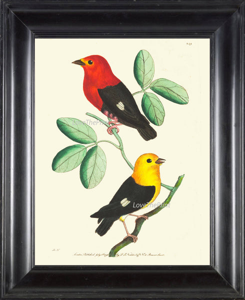 Bird Print  Art NOD232 Beautiful Antique Red Yellow Songbirds Green Tree Leaves Illustration Nature Wall Home Room Decor to Frame
