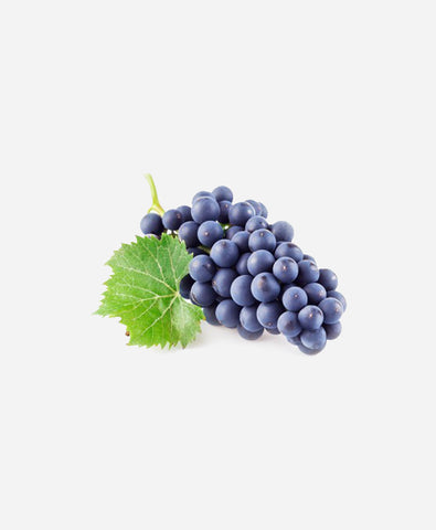 Grapes Black Globe