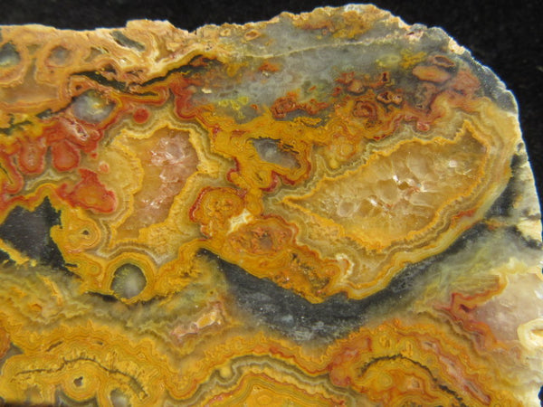 Polished Crazy Lace Agate CLA222