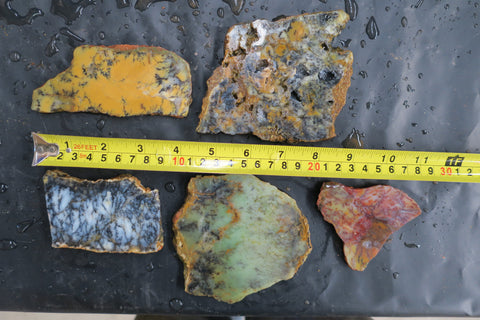 Unpolished Dendritic Opal slabs. DOU 113