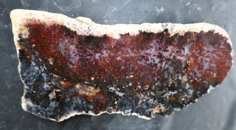 Dendritic Opal Polished Slab.  DOP116