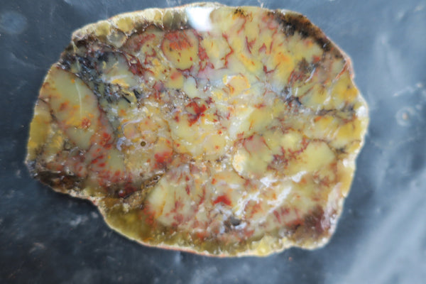 Dendritic Opal Polished Slab.  DOP119