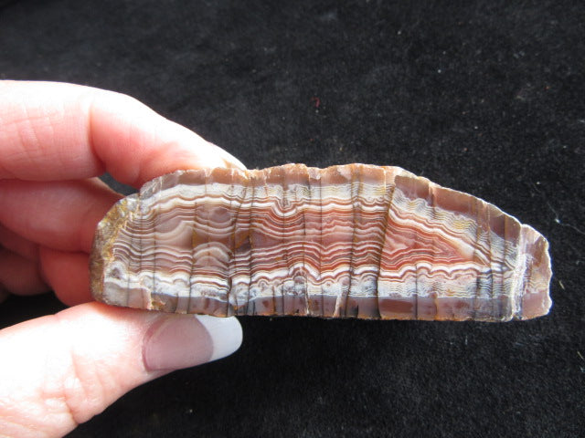 Polished Pilbara Agate PA229