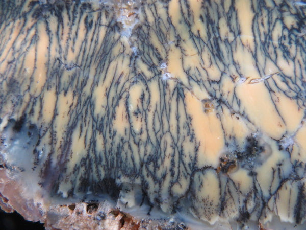 Polished Dendritic Opal DO134