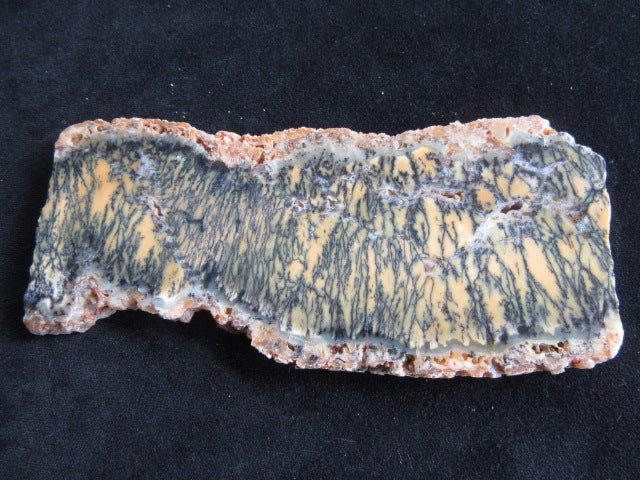 Polished Dendritic Opal DO135