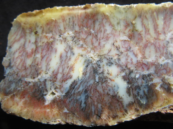 Polished Dendritic Opal DO139