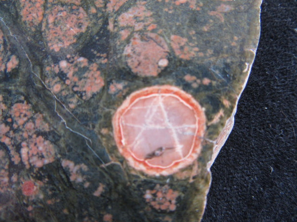 Polished Spherulitic Rhyolite SR112