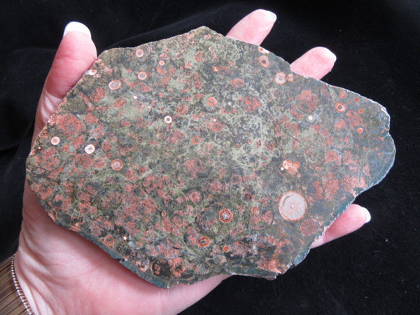 Polished Spherulitic Rhyolite SR111