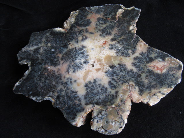Polished Dendritic Opal DO127
