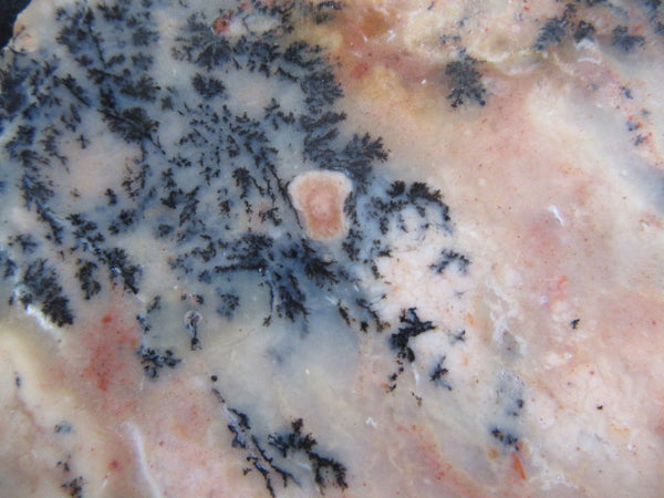 Polished Dendritic Opal DO128