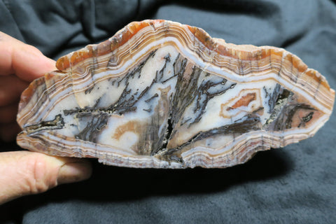 Polished  Pilbara Agate.  PA219
