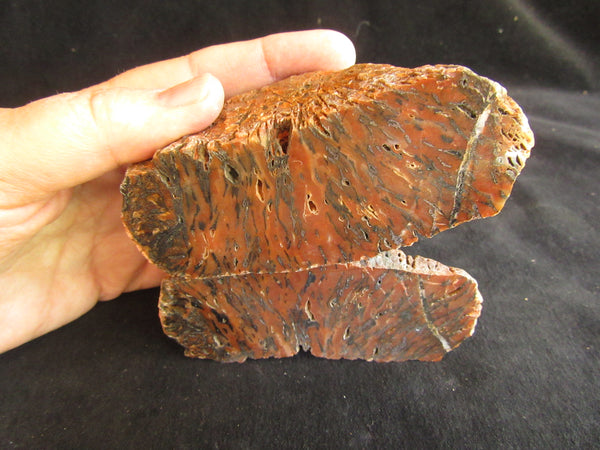Polished Pilbara Agate PA242