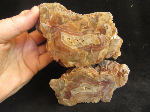 Polished Pilbara Agate PA245