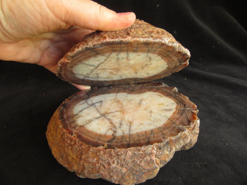 Polished Pilbara Agate PA246