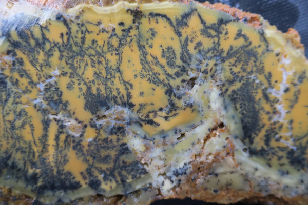 Unpolished Dendritic Opal slab. DOU 122