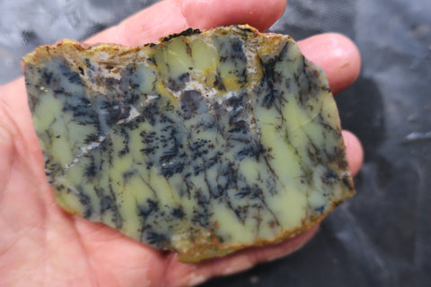 Unpolished Dendritic Opal slab. DOU 128