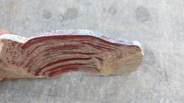 Polished fossil stromatolite. Domal from Irregully formation IRR114