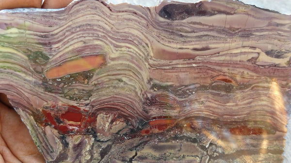 Polished fossil stromatolite. Domal from Irregully formation IRR122