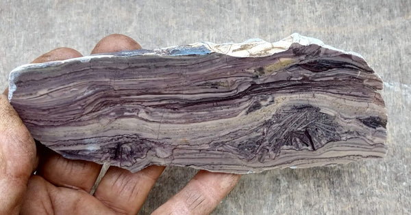 Polished fossil stromatolite. Domal from Irregully formation IRR118
