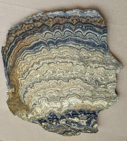Polished fossil stromatolite from Bolivia. BST101