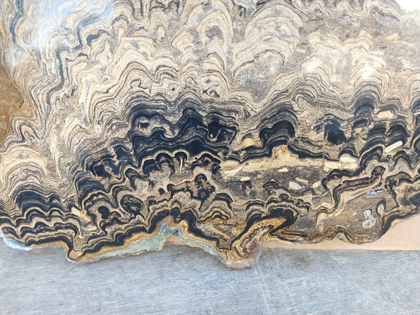 Polished fossil stromatolite from Bolivia. BST104